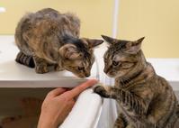 麦ニャンズ、久々にお風呂に集合 - 猫と夕焼け