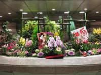 汐留駅の地下二階はまるで春でした。 - 子猫の迷い道Ⅱ