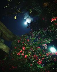 *本日1/6は〜 - salon de thé okashinaohana 可笑的花