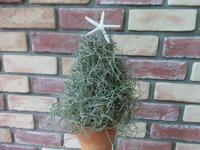 クリスマスツリー - connie's