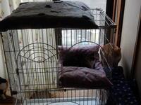 追加の薔薇柄ベッド - 愛犬家の猫日記