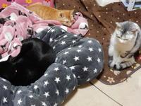 噂のしまむ○巻き - 愛犬家の猫日記