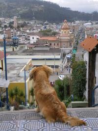 イヌ年のごあいさつ - ルチャをたずねて三千里
