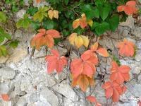 夏と秋が隣り合わせのカプリ島 (Capri 4) - エミリアからの便り