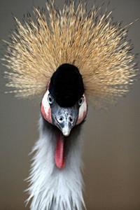 門の外にいる鳥たち - 動物園放浪記