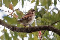 平和な日本庭園 - 四十雀の欣幸 ~野鳥写真日記~