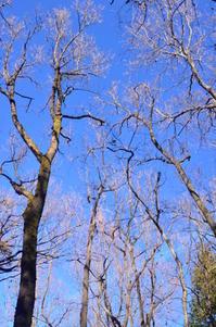 新年の森 - つれづれ日記