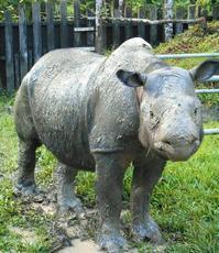 心配されるマレーシア最後のメスのスマトラサイ Iman - 親愛なる犀たちへ