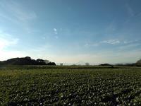 七草の日、春を先取りしたような風景が | 新年の三浦の畑から - 横須賀から発信 | プラス プロスペクトコッテージ 一級建築士事務所
