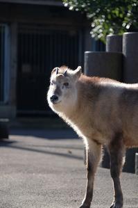 色々な動物達 - 動物園に嵌り中