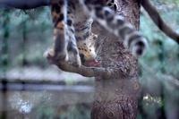 萌えポイント - 動物園へ行こう