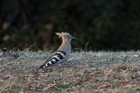 初撮り - 野鳥フレンド  撮り日記
