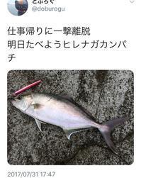 年間を通して陸からカンパチが釣れるか実証・神津島【下半期編】 - [レツブロ] 構わない どう見られても ブログなら