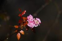 厳冬の花 - tokoのblog