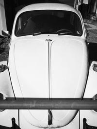 鼻の長い車 - 節操のない写真館