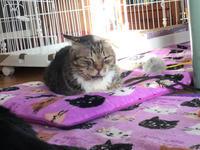 福ちゃんの通院・治療したかった白黒ケガ猫 - ねこ結び2