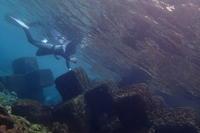 18.1.8旧成人は雨に負けず、素潜るのだ! - 沖縄本島 島んちゅガイドの『ダイビング日誌』