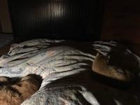 二匹の猫と飼い主のスペース配分 - もるとゆらじお