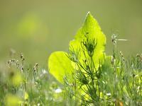 冬の草 - いつかみたソラ