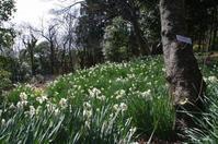 1/7、NC700Sで二宮の吾妻山公園へ菜の花を見に - 某の雑記帳