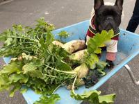菜園ブログか犬ブログか・・・ - ぬるぅい畑生活
