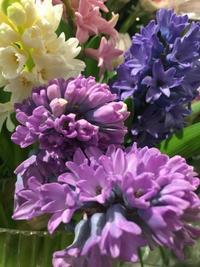春のお花ぞくぞく - ~ Flower Shop D.STYLE ~ (新所沢パルコ・Let's館1F)