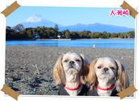 2018年1月2日 大瀬崎 - 週末は、愛犬モモと永吉とお出かけ!Kimi's Eye