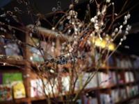 今週のWORLD BOOK CAFEさんは「ネコヤナギ」。2018/01/06。 - 札幌 花屋 meLL flowers