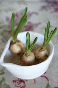 水耕栽培その1 - ハーブのある暮らし