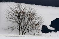 屋根アート - ekkoの --- four seasons --- 北海道