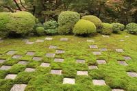 2017.11 京都東福寺 - ゆらりっぷ -yurari's trip-