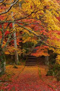 京都の紅葉2017 秋色絢爛・龍穏寺 - 花景色-K.W.C. PhotoBlog