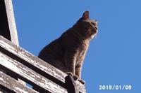 今日はポカポカ陽気です - 猫と自然と散歩の日々
