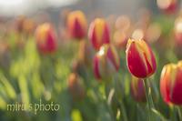 気分は春。 - MIRU'S PHOTO