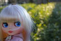 最後に日比谷公園でも外撮り - T's Photo Diary2(Grass Field*)
