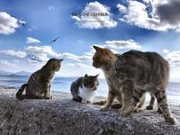 猫の楽園へ - 3姉妹成長記録&手作りのものたち