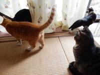 おさがりのお年玉 - 愛犬家の猫日記