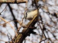 ゴジュウカラがいた野鳥の森 - コーヒー党の野鳥と自然 パート2