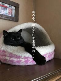 しーちゃんVSハチ おろして - gin~tetsu~nosuke