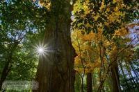 太陽を撮る - Mark.M.Watanabeの熊本撮影紀行