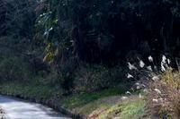 散歩道の柿の木茶屋≪メジロ≫ - そよ風のつぶやき