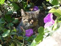 カプリ島には猫がいっぱい2 (Capri 6) - エミリアからの便り