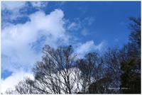 今日の青い空と鳥。 - Season of petal