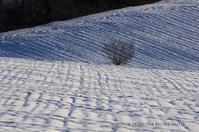 織物 - ekkoの --- four seasons --- 北海道