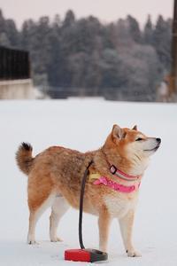 粉雪とシャンプーとタヌキ - 写心食堂
