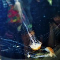 続・浮遊生物 - のーんびり hachisu 日記