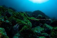 ギャング - Diving Life ~Aita pe'a pe'a~