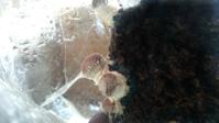 椎茸 #2-2 - 緑と手仕事 ワンダーライフ
