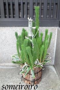 京都街中の門松その2。 - 染め色・いろいろ