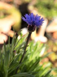 花の物語 - hibariの巣